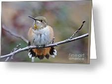 Hummingbird Stretch Six Greeting Card