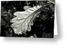 Leaf Greeting Card by Odon Czintos