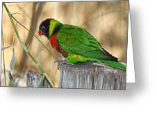 Lorikeet Parrot Sitting On A Fence Post  Greeting Card