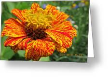 Lovely Orange Speckles Greeting Card