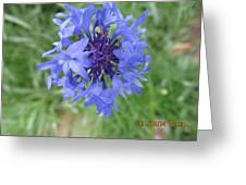 Lovely Purple Close-up Greeting Card