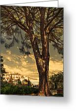 Pine Tree In The Secret Garden Greeting Card