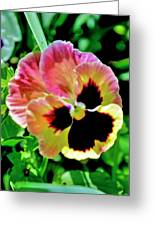 Pink And Yellow Pansy Greeting Card