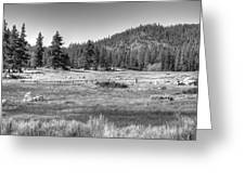 Prairie In South Lake Tahoe Greeting Card