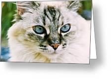 Pretty Blue Eyes--mia Greeting Card