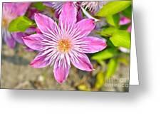 Pretty Pink Greeting Card