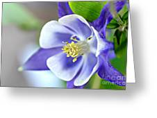 Purple Columbine Bloom Greeting Card