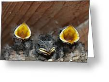 Raising Baby Birds  Www.pictat.ro Greeting Card by Preda Bianca Angelica