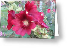 Red Hollyhock Greeting Card
