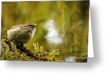 Small Tree Finch Greeting Card