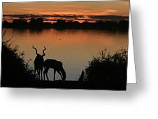 South African Sunset Greeting Card