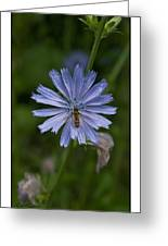 Spring Flower And Hoverfly Greeting Card