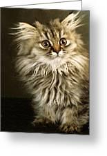 Startled Persian Kitten Greeting Card