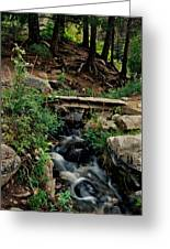 Stream In Tall Pines Greeting Card