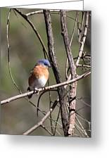 Sucarnoochee River - Bluebird Greeting Card
