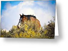 Wild Horse In The Sage Greeting Card