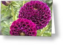 Wow Pink Dahlia Orbs Greeting Card