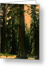 Yosemite Forest Greeting Card
