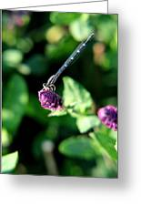 0003 Dragonfly Yoga On A Salvia Burgundy Candle Greeting Card