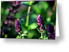 0004 Dragonfly Yoga On A Salvia Burgundy Candle Greeting Card
