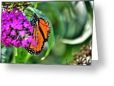 001 Making Things New Via The Butterfly Series Greeting Card