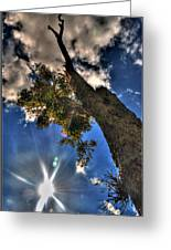 001 Reaching For The Sky Greeting Card