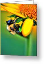 001 Sleeping Bee Greeting Card