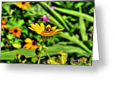 002 Busy Bee Series Greeting Card