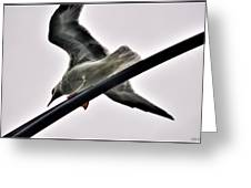 002 Gull To Out Do Wallenda Greeting Card