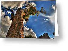 002 Reaching For The Sky Greeting Card