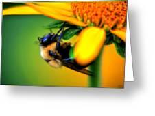 002 Sleeping Bee Series Greeting Card
