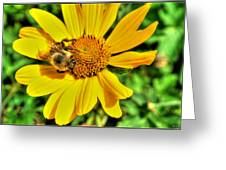 003 Busy Bee Series Greeting Card