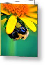 003 Sleeping Bee Series Greeting Card