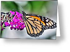 004 Making Things New Via The Butterfly Series Greeting Card