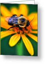 006 Sleeping Bee Series Greeting Card