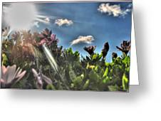 007 Summer Sunrise Series Greeting Card