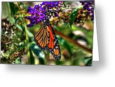 011 Making Things New Via The Butterfly Series Greeting Card