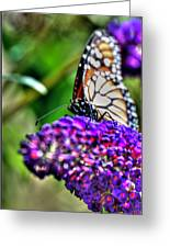 012 Making Things New Via The Butterfly Series Greeting Card