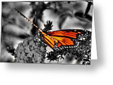 014 Making Things New Via The Butterfly Series Greeting Card