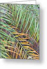 014 Palm Leaves Greeting Card