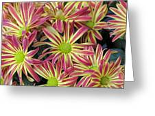 015 Pink And Yellow Flowers Greeting Card