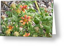 021 Wild Flowers Greeting Card