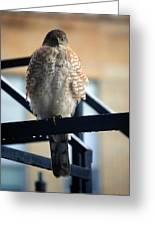 03 Falcon Greeting Card