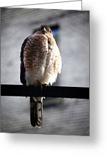 05 Falcon Greeting Card