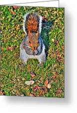 06 Grey Squirrel Sciurus Carolinensis Series Greeting Card