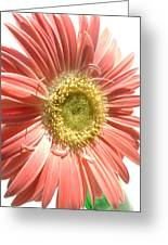 0620a-003 Greeting Card