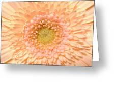 0625.2.c3 Greeting Card