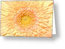 0625c Greeting Card