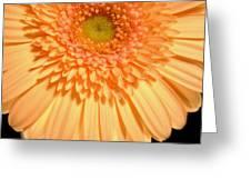 0627c3 Greeting Card