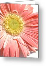 0628a-002 Greeting Card